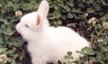 Conejos M&M